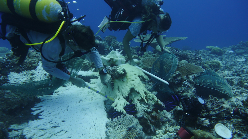 Rescue a Reef: Crown of Thorns Starfish Removal with Coral Reef CPR