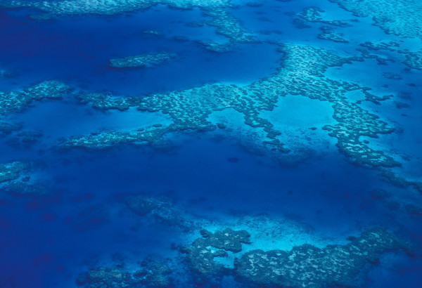 Pledge your support for the Great Barrier Reef