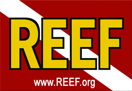 Reef Environmental Education Foundation