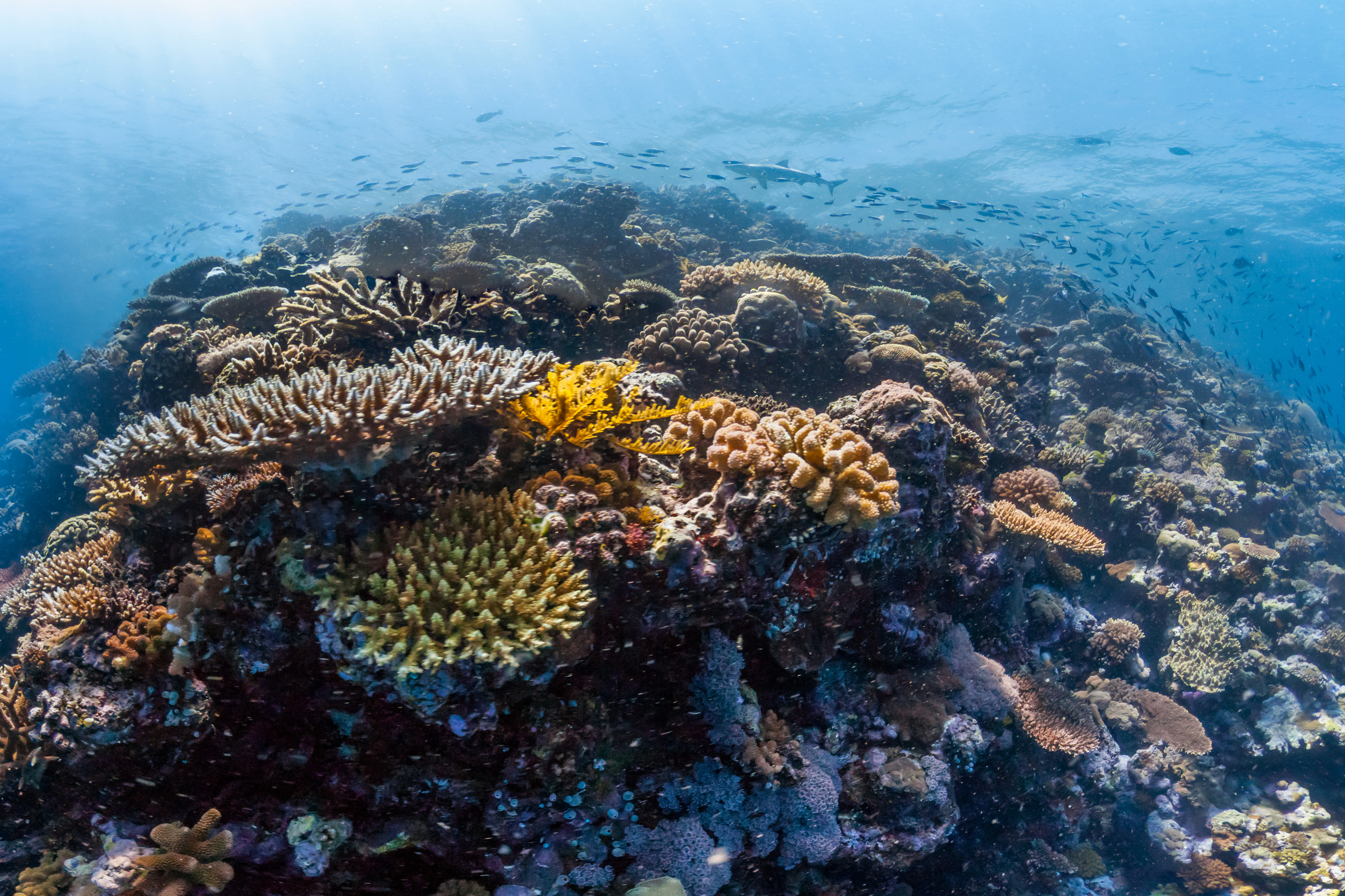 UK pledges protection for coral reefs