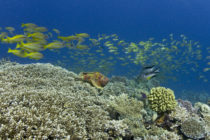 Record investment in the Great Barrier Reef