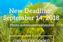 IYOR Photo contest – Life in the Mesoamerican Reef