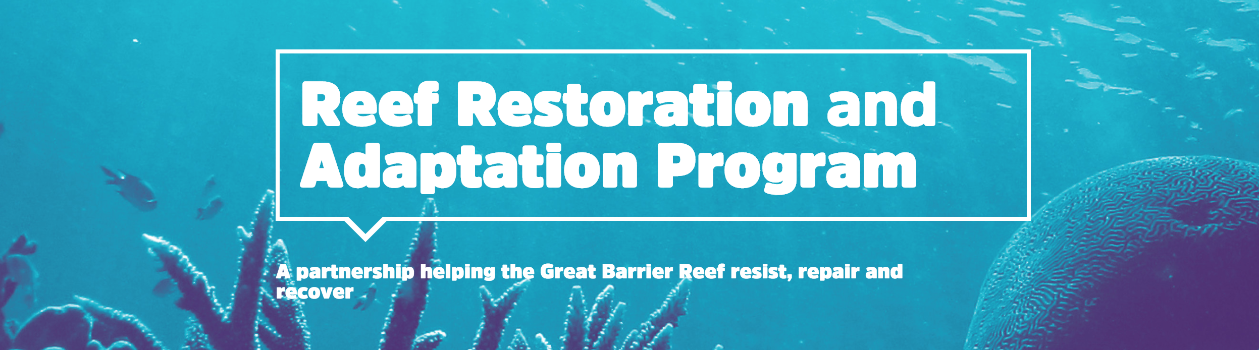 Reef restoration videos from the Reef Restoration and Adaptation Program, Australia