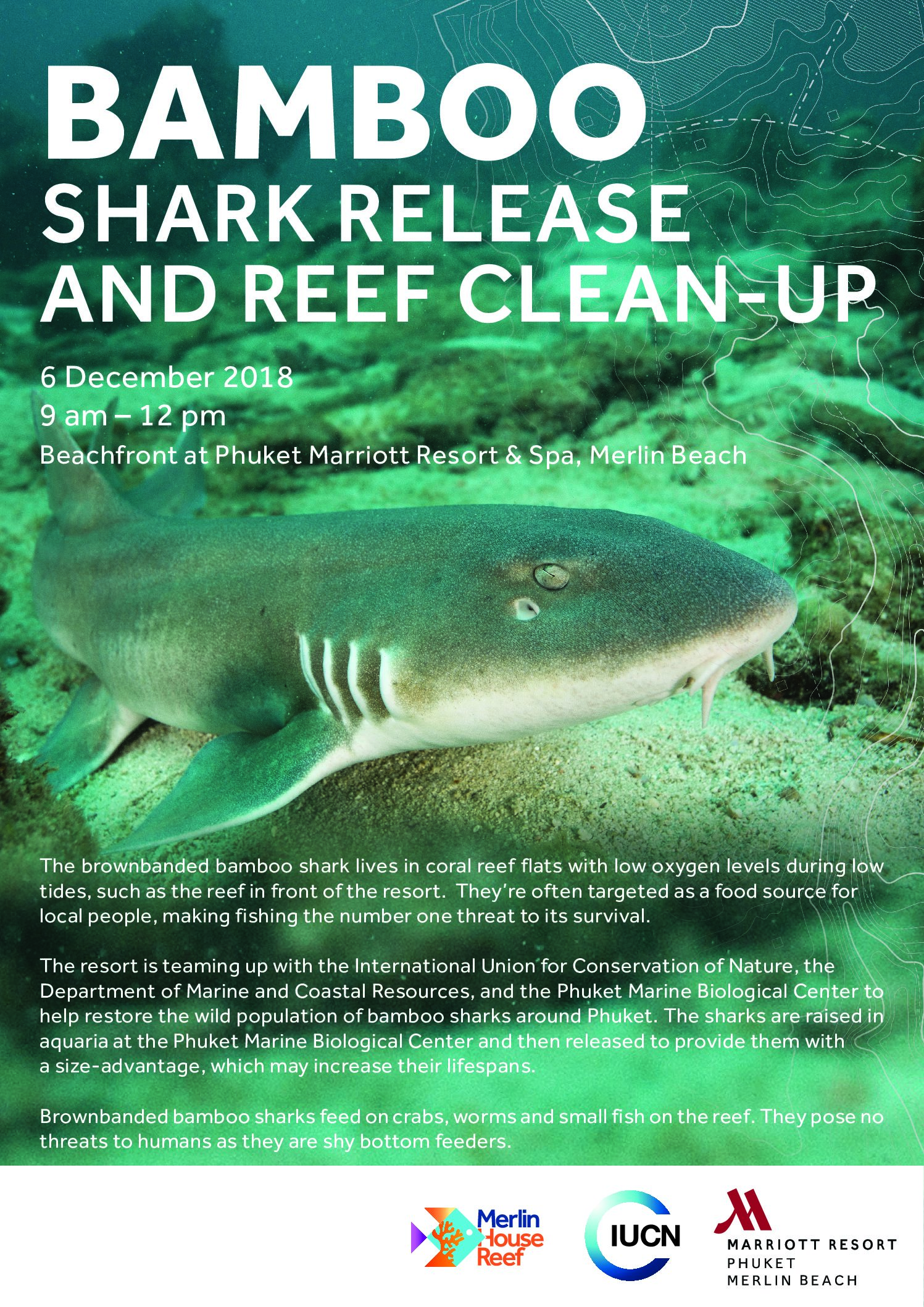 Bamboo Shark Release and Reef Clean-up