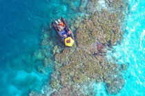 Our Vision for Thriving, Diverse and Resilient Coral Reef Ecosystems