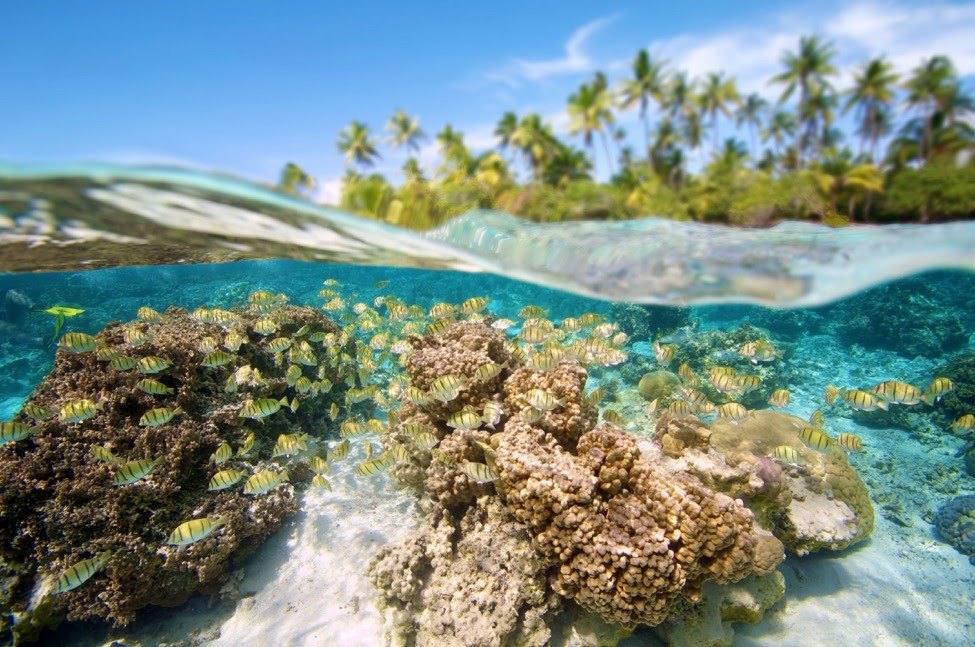 Status and Trends of Coral Reefs of the Pacific, webinar